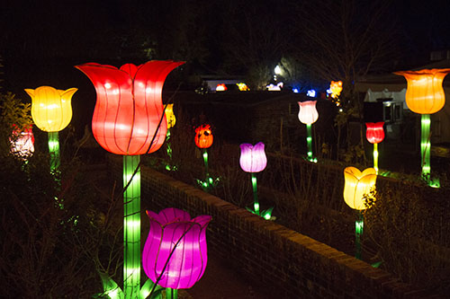 china lights brightens the botanical gardens mid city messenger