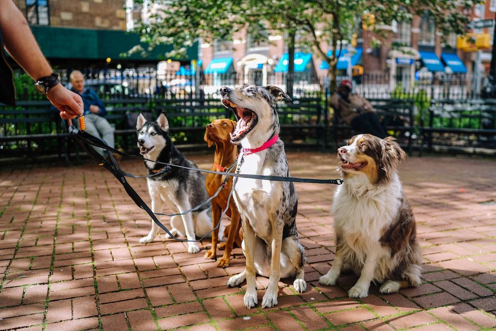 dog friendly new orleans